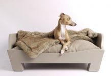 Best dog beds for chewers