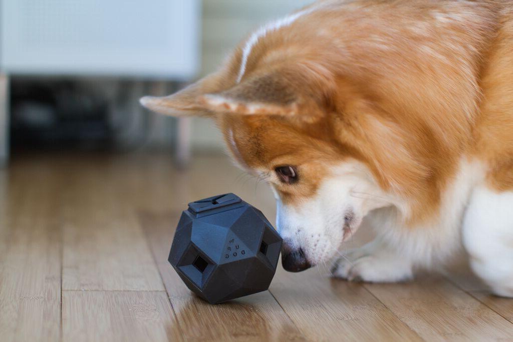 HMtip_interactive_dog_toys