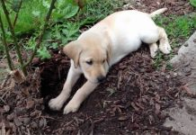 dog_dig_featured