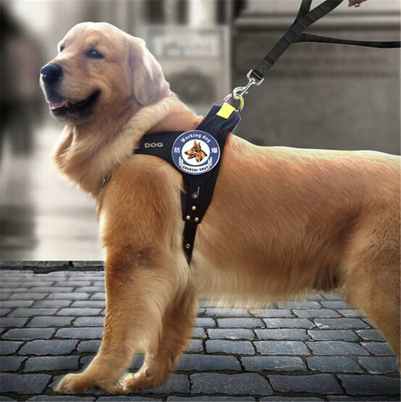 dog_harness_featured