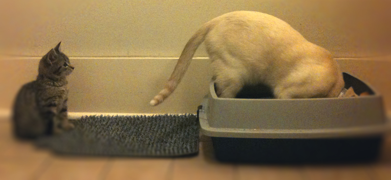 Dog in a cat litter box