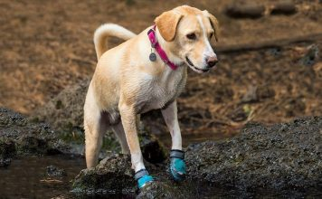 Best boots for Dogs