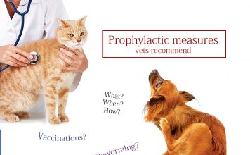 Prophylactic measures for pets